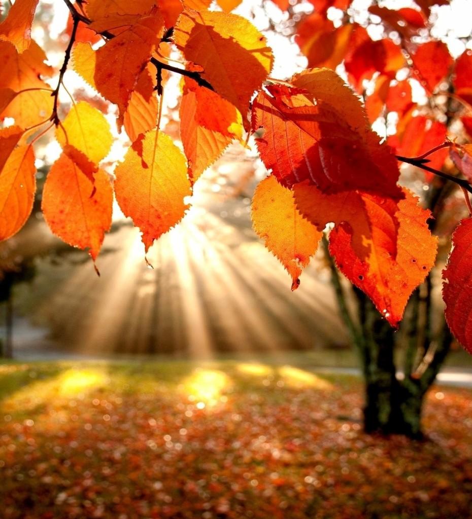 nature trees autumn leaves